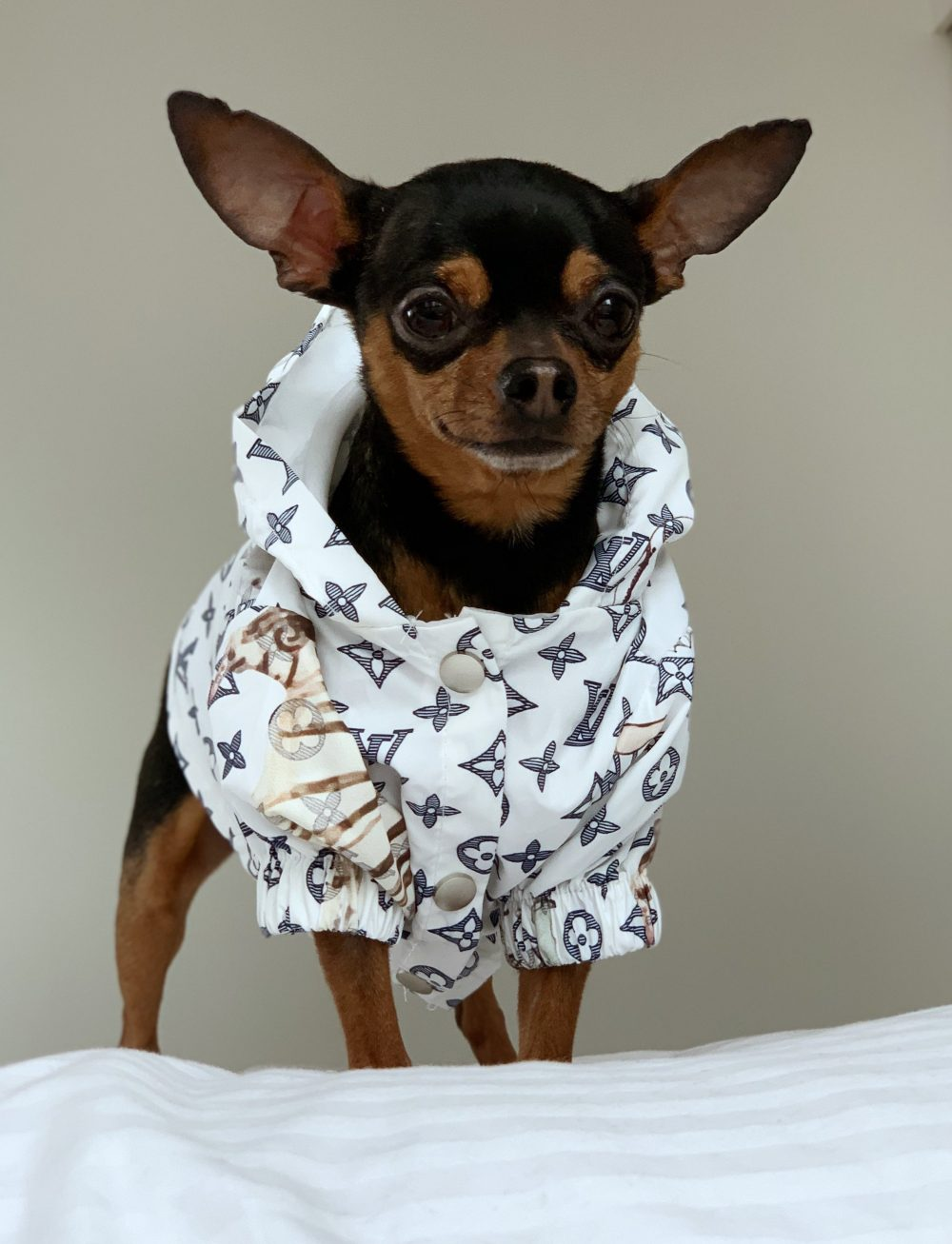 Love Me Windbreaker - Furbaby Couture