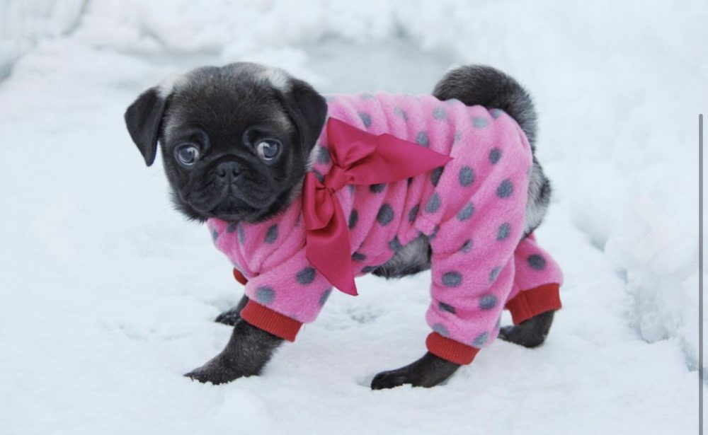Pretty in Pink - Furbaby Couture