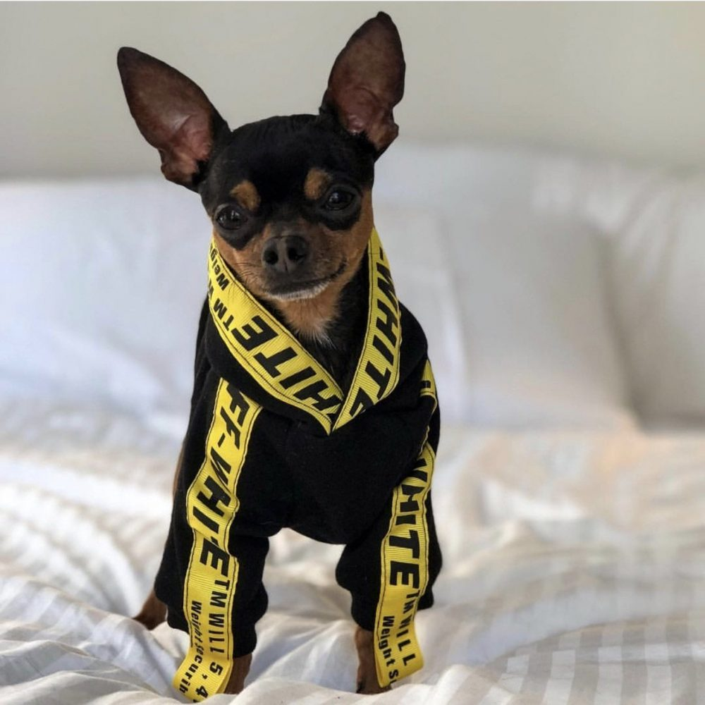 Caution - Furbaby Couture