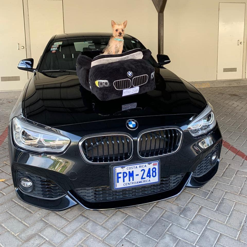 BMW - Furbaby Couture