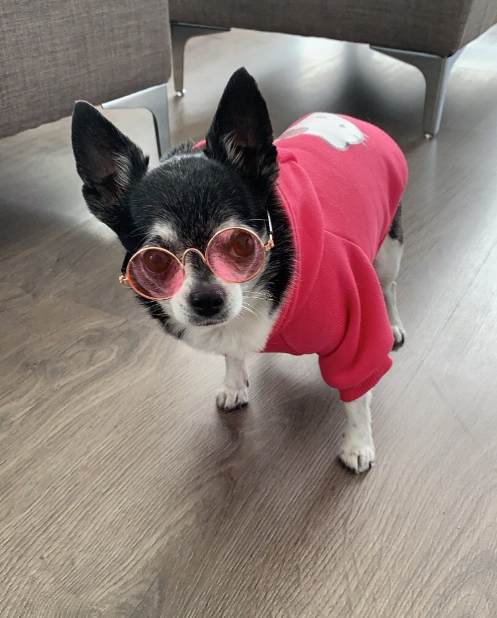 Chica's sunnies - Furbaby Couture