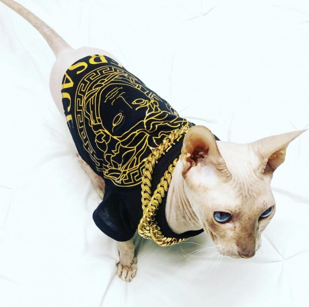 Pawsace - Furbaby Couture