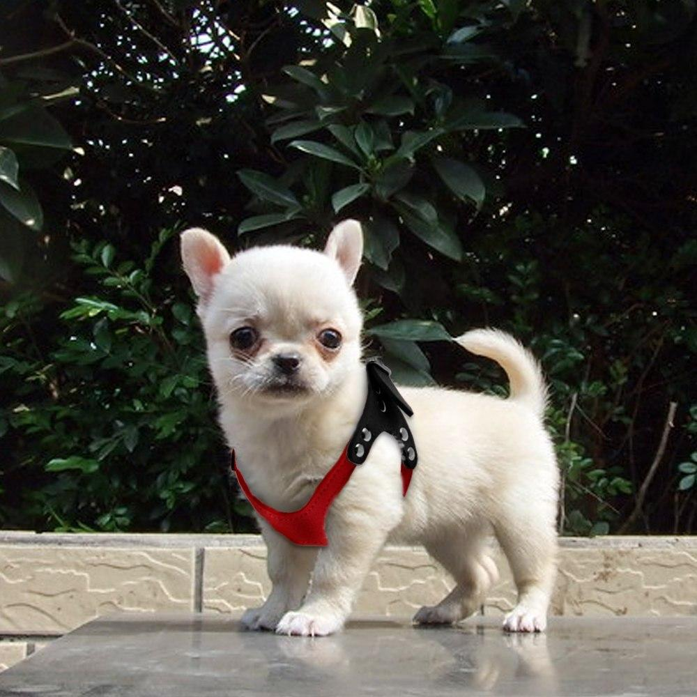 Saddle Up Harness - Furbaby Couture
